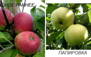 Сорта яблонь районированные для московской области