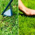 Сорта газонной травы