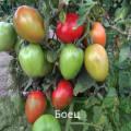 Сорта непасынкующихся томатов для открытого грунта