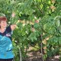 Сорта персиков для донецкой области