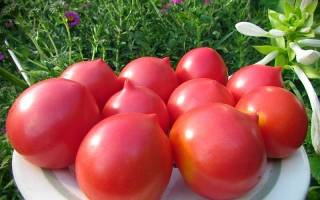 Сорта помидор устойчивые к болезням
