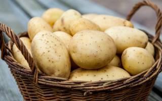Сорта картошки хорошие