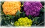 Сорта капусты цветной для сибири открытый грунт