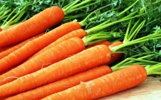 Сорта морковь для хранения
