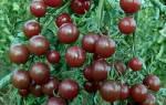 Томат вишня черная характеристика и описание сорта