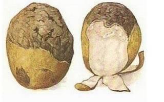 Сорта картофеля нематодоустойчивые
