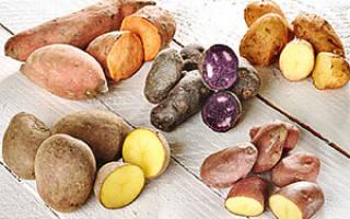 Сорта картофеля столовые