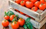 Сорта помидор для длительного хранения