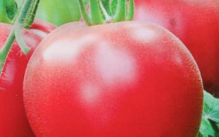 Томат розовый спам характеристика и описание сорта