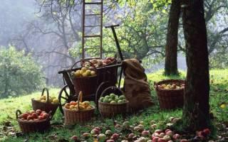 Сорта деревьев фруктовых