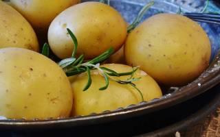 Сорта картофеля чипсовые