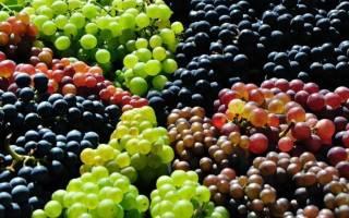 Сорта винограда урожайность