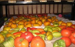 Сорта томатов для длительного хранения в свежем виде