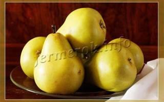 Сорта груш которые хорошо хранятся