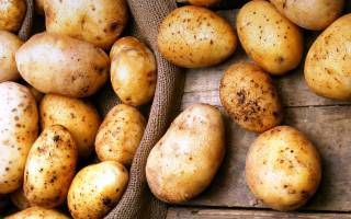 Сорта картофеля для глинистой почвы