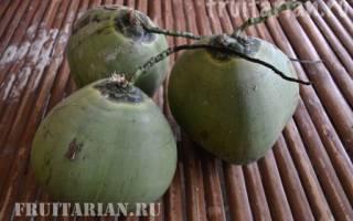 Сорта кокоса