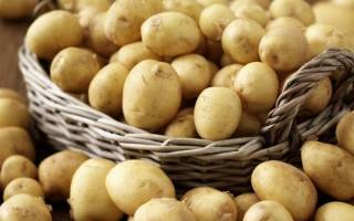 Сорта скороспелой картошки