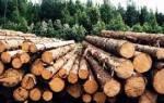 Сорта древесины хвойных пород