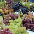 Сорта винограда потапенко