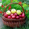 Сорта яблонь для подмосковья зимостойкие