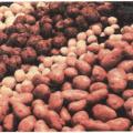 Сорта картофеля для нижегородской области